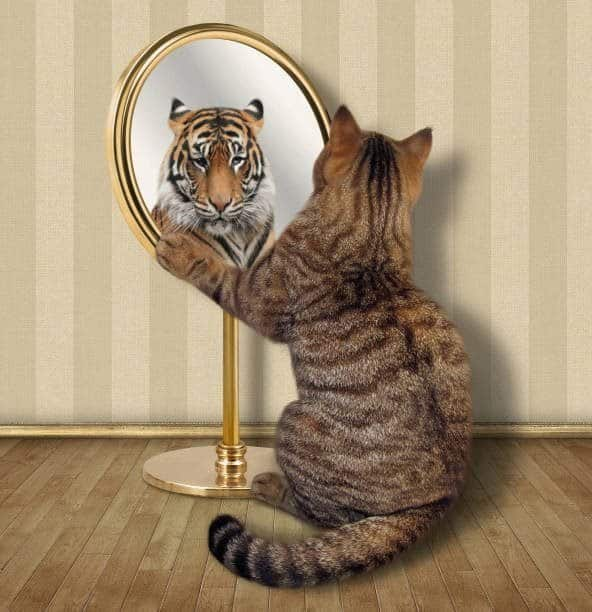 MIRROR, MIRROR, Who Am I? Developing the Inner World and Self